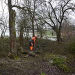 Erfüllung der Baumschutzordnung