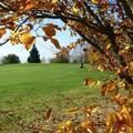 Fotowettbewerb Bilder November